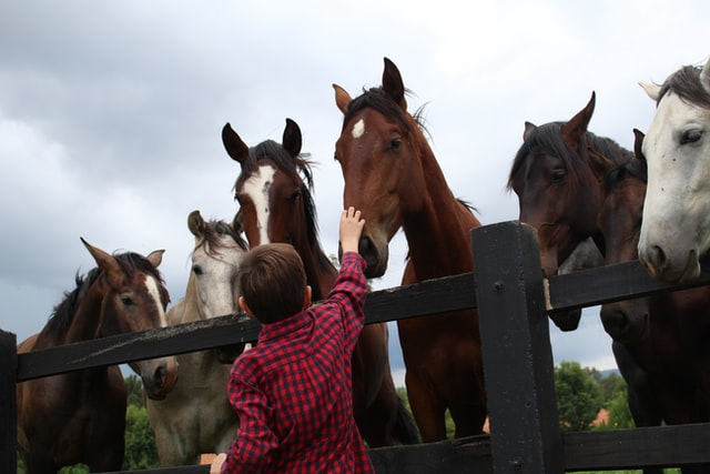 travel with kids horse riding